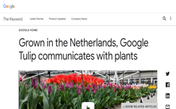 screenshot Google Tulip